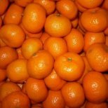 Малките слънчица през зимата-мандарините