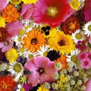 Какви необичайни ползи имаме от цветята вкъщи
