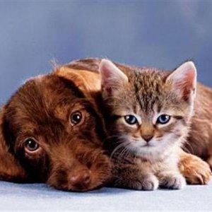 С каква енергия лекуват кучетата и с каква котките