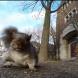 Видео снимано от катеричка, стана хит в интернет
