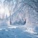 Прогноза за времето през декември: Сняг затрупва страната в началото на декември, а по Коледа ...