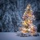 Необичайни факти за декември, които не знаете