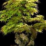 Дървета, които предпазват от нещастия и злини