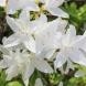 Домашните цветя, които носят късмет, пари и любов