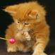 Защо трябва да имате задължително котка у вас? Няма да повярвате колко е голяма лечебната й сила.