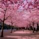 Прекрасни улици, на които пролетта вече пристигна!