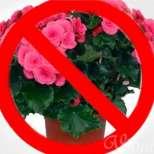 Кои стайни растения са опасни за здравето, а са в дома ви!
