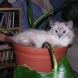 Какво да направим срещу котешките лапи в саксията