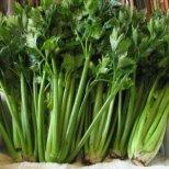 Целината - невероятен зеленчук и лечебно растение
