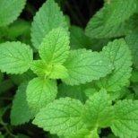 Полезни билки против хрема