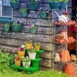 Как да подготвим растенията вкъщи за предстоящия сезон