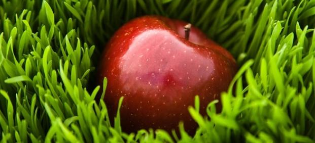 Диети с ябълки за отслабване 5кг за седмица