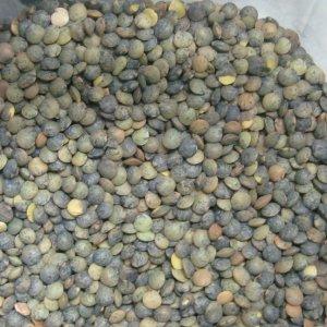 Как да разпознаваме био лещата и био бобът