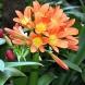 10 стайни растения, които се гледат сами. Не трябва никакви специални грижи да полагате за тях!