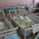 Касата сложи лимит на ражданията - какво да правят бременните да стискат ли?