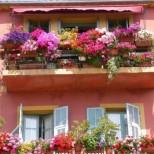 Ето как правилно да насадите буйни китки в саксии и всички да ви завиждат за красивите цветя на балкона