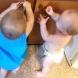 Майка чу децата си да се смеят неистово, а когато надникна, веднага изтича за камерата...