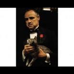 Историята на една улична котка, която стана герой в една от най-легендарните сцени в киното (Видео)