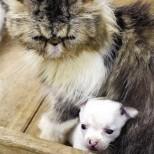 Пенсионер изуми света! Котката му роди куче!