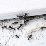 Лесен начин! Защита от мравки у дома с ориз!
