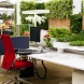 Унищожете стреса в работата си с помощта на билки