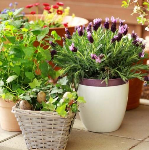 Полейте цветята си вкъщи с тези две неща и ще виреят като ненормални. Най- лесният трик да имате уникално красиви цветя у дома
