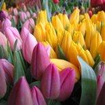 Вижте, кое цвете управлява вашата съдба