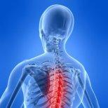 Билки при болки в гърба