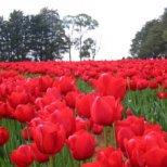 Днес се отбелязва Първи май - Ден на труда