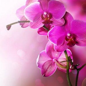 Какво цвете да отглеждаме според зодията