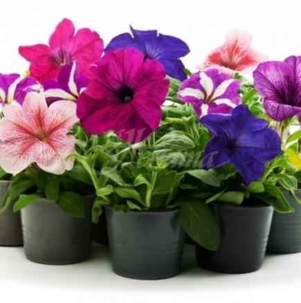 Пролетно отглеждане на растения вкъщи