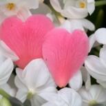 Как да привлечем любовта в живота ни? Древен ритуал, който даже бабите ни са правили. Пробвайте нищо няма да ви коства