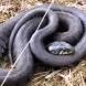 Бебе ухапа змия и вижте какво се случи