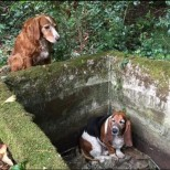 Куче се грижи за приятелче в беда в продължение на цяла седмица