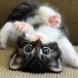 Ето защо трябва да си гледате котка вкъщи. 6-тата причина направо ще ви разбие