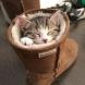 25 снимки, които ще ви разкрият защо трябва да си вземете да си гледате котка вкъщи