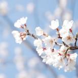 Пролетен хороскоп за всички зодии - Вижте, дали ще имате късмет в най-красивия сезон на годината!