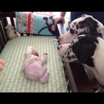 Тези родители обръщат гръб за една секунда и оставят бебето си само с кучето. Когато се връщат виждат това ...