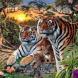 Ще можете ли да намерите всичките тигри на снимката. Само 9% от хората успяват. Вие сред тях ли сте?
