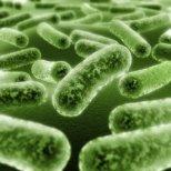 За какво са полезни пробиотиците