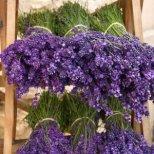 Цветята чийто аромат въздейства успокояващо и приспивателно