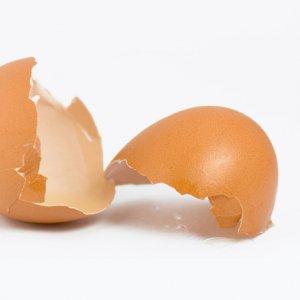 За какво са полезни черупките на яйцата