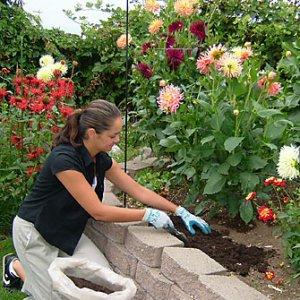 Грешките на начинаещите градинари