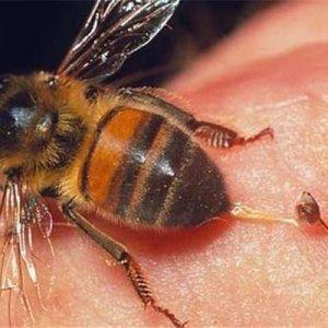 Невероятните качества на пчелната отрова