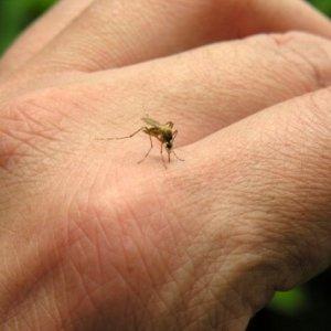Бабини рецепти срещу ухапване от комари