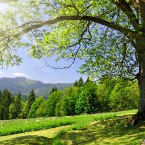 Зареди се с енергия от дърветата
