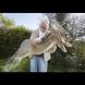 (Снимки) Вижте най-големите зайци в света: Искат да се галят и да гледат телевизия