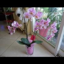Малко съвети за грижите за орхидеята: НАПРАВЕТЕ това и тя ще цъфти повече от 3 пъти годишно!