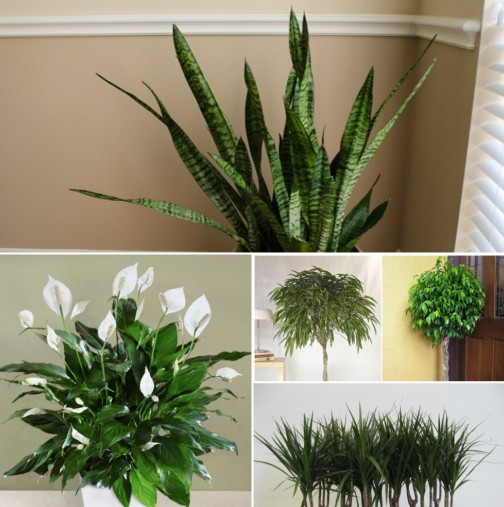 Девет невероятни стайни растения, които почистват въздуха по-добре от всяко устройство, което можете да си купите!
