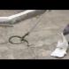 Змия в двора на детска градина! Вижте как я уловиха! (ВИДЕО)